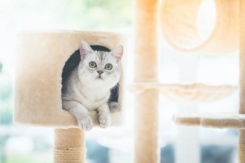 キャットタワーのハウスで寛ぐ猫