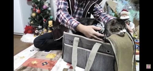 バッグに入れられる猫
