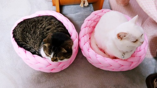 上から見た2匹の猫