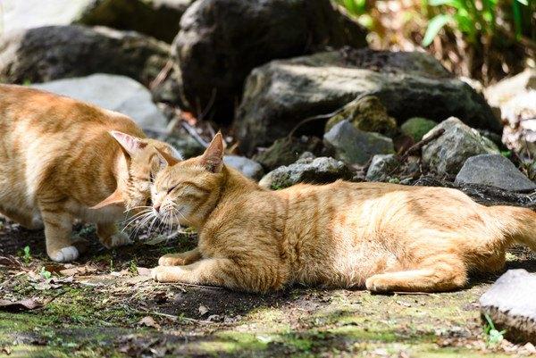 コミュニケーションを取る2匹の猫