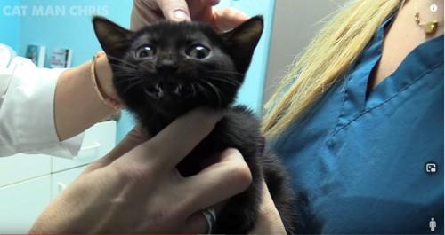 診察を受ける黒猫