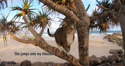 ジャンプしようとする猫