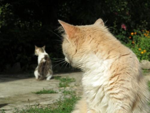 他の猫を見る猫