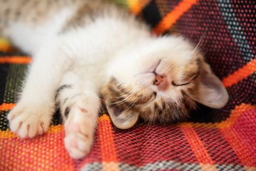 ぐっすり眠る子猫