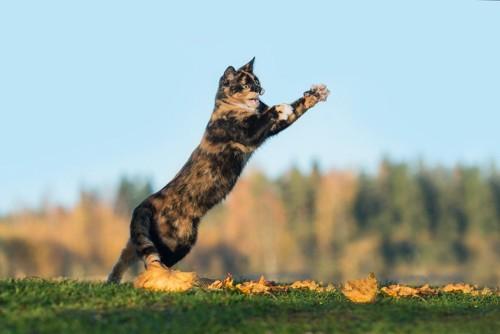 真空行動で飛ぶ猫