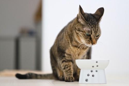 イカ耳をしてご飯を待つ猫