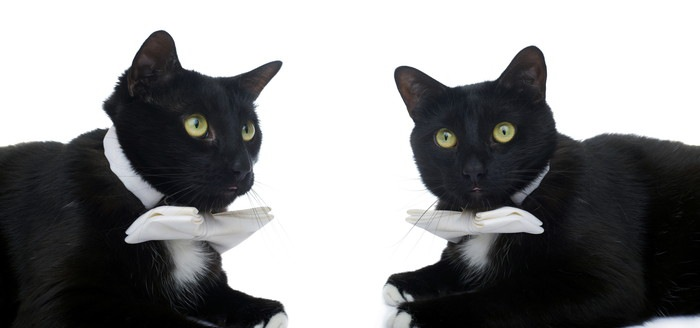 蝶ネクタイをつけた猫