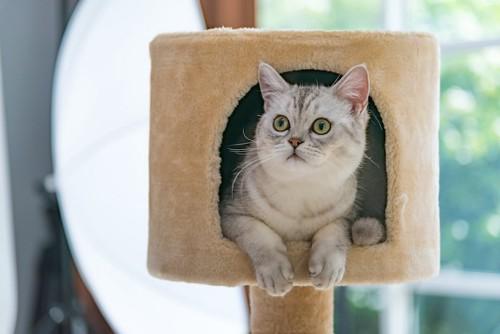 キャットタワーのハウスに入ってくつろぐ猫