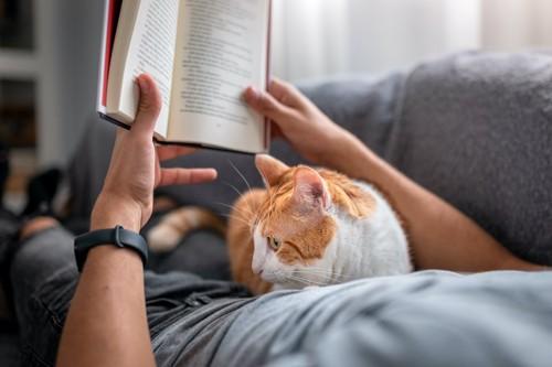 横になって本を読む飼い主のお腹に乗る猫