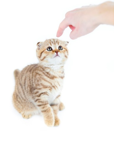 猫を指さす人