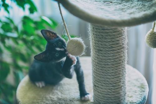 ぶら下がるボールで遊ぶ黒い猫