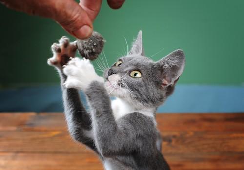 おもちゃを掴もうとする猫