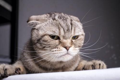 不満そうな顔をした猫