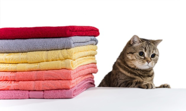 バスタオルと猫
