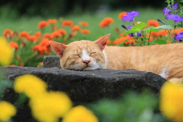 暖かな場所にいる猫