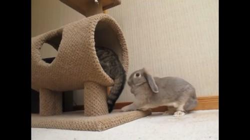 反撃するウサギ