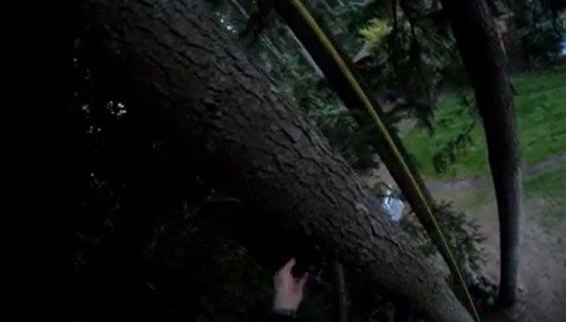 木の上で立ち往生するブーツ