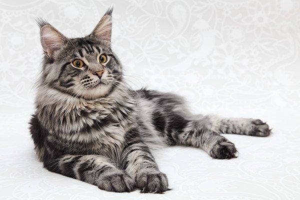 膝の上で体をなでられる猫