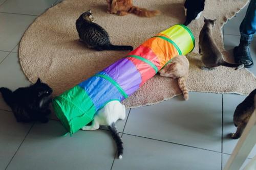 トンネルと猫たち