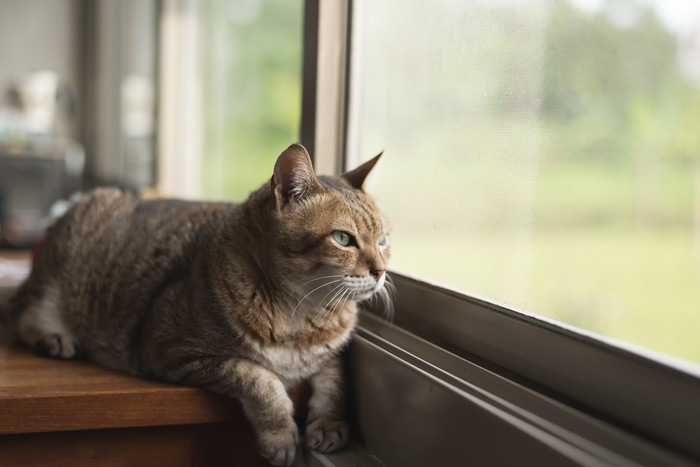 窓の近くに座る猫