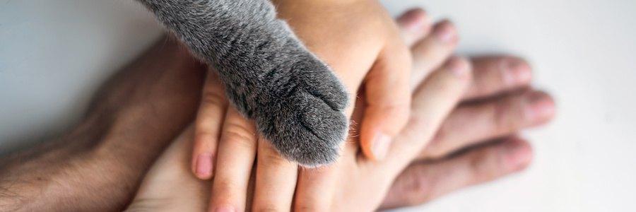 重ねられた人の手の上に置かれた猫の手