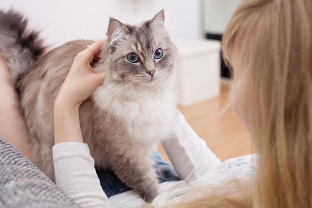 猫と触れあう人