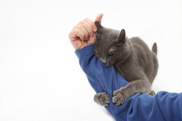 青い服の腕を掴む猫