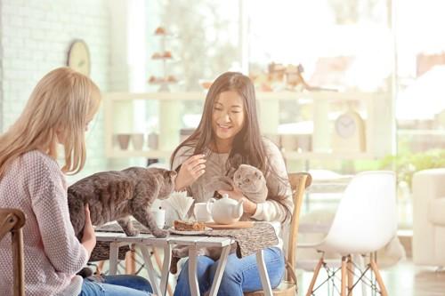 猫と一緒にカフェを楽しむ二人の女性