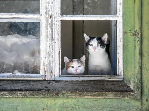 待っている猫