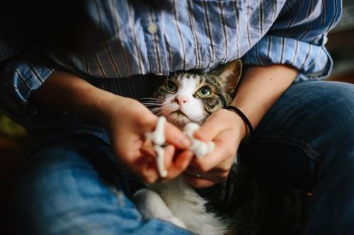 飼い主に押さえつけられて爪切りされている猫