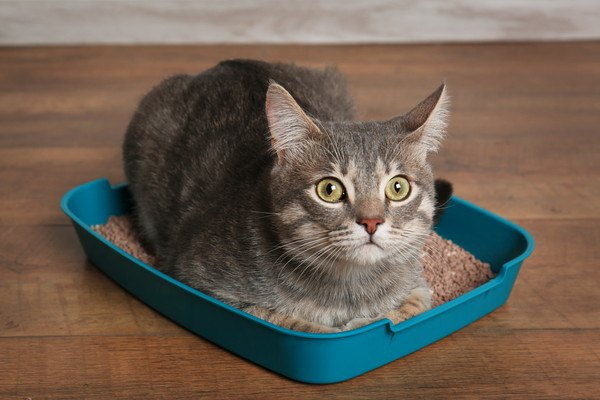 トイレに座り込んでいる猫