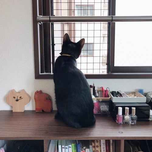 網戸から外を見る猫