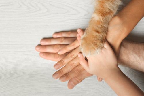 人と手を重ねる猫