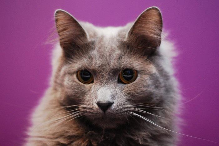 紫背景のネベロング
