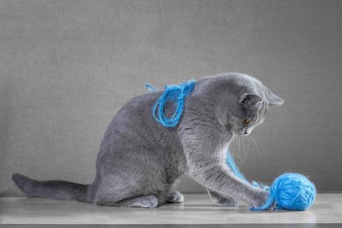 毛糸で遊ぶ猫