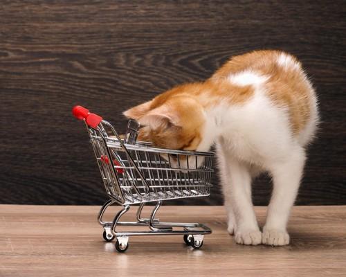 カートを覗きこむ子猫