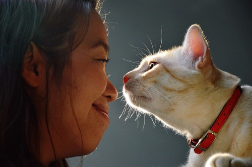 猫と顔を合わせる女性