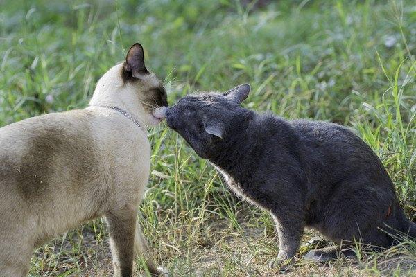 顔を擦り付ける猫二匹