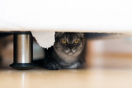 ベッドの下にいる猫