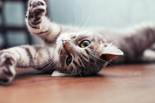 床に寝転んで両手を伸ばす猫