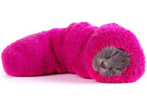 ピンクの靴下に入り込む子猫