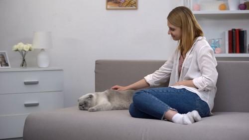 ソファーで眠っている猫を優しく撫でる女性