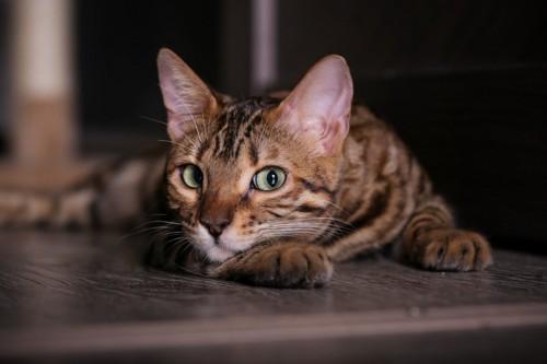 チラ見する猫