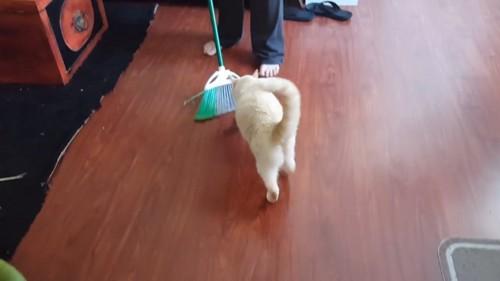 戻ってくる猫