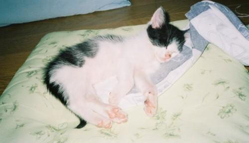 寝ている黒白の子猫