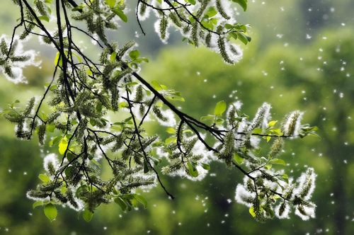 風に乗って飛ぶ花粉