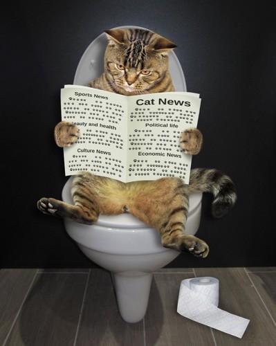 新聞を読んでトイレに入る猫