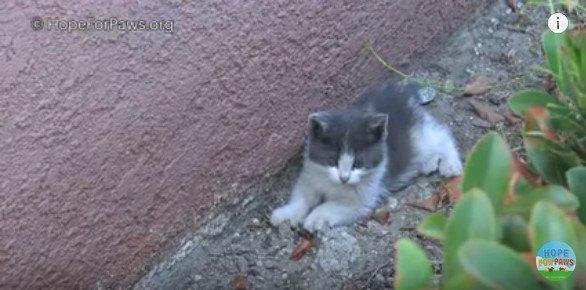 植込みと壁の間にいる子猫