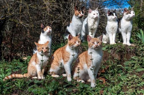 整列する猫たち