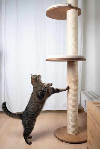 タワーの前で躊躇する猫